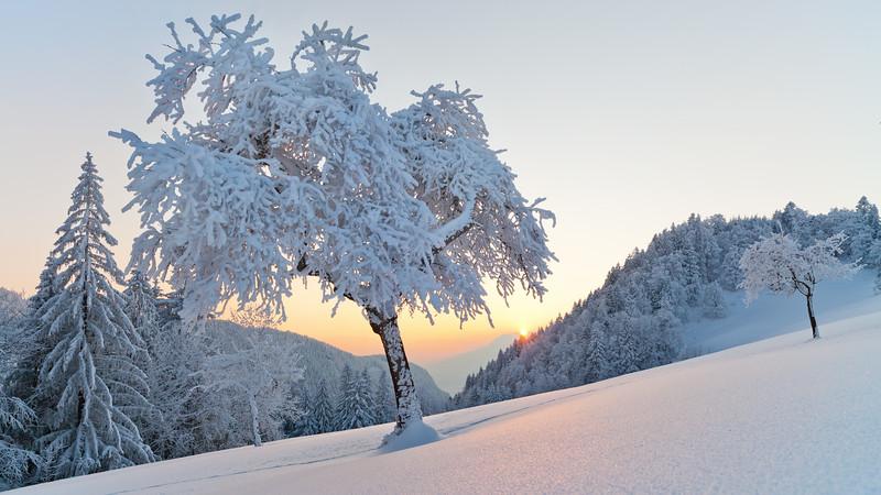 Frost über dem Rheintal oberhalb von Götzis