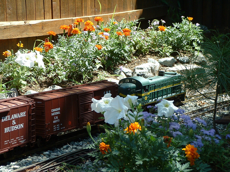 Local with engine 205: Local passes the flower jungle in Late August