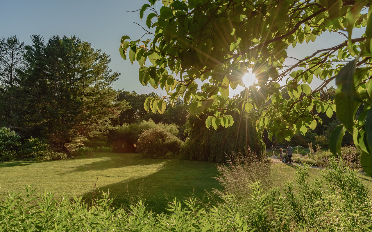 peeking sun!! - south vista at Fernwood Botanical Garden