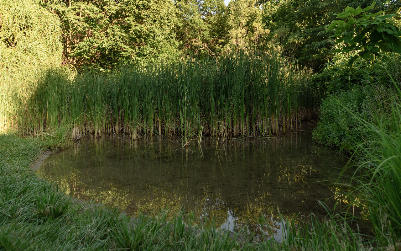 frog pond at Fernwood Botanical Garden and Nature Preserve
