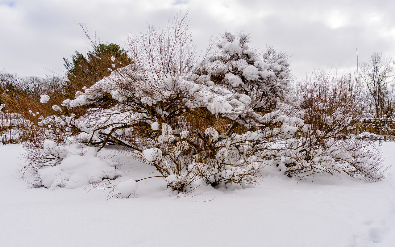 snow top at Fernwood Botanical Garden and Nature Preserve