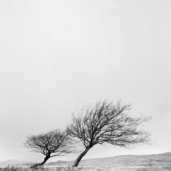 Trees at Loch Tula
