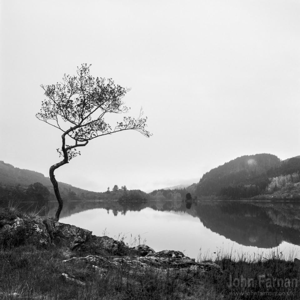 Loch Chon tree