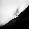 Tree in mist