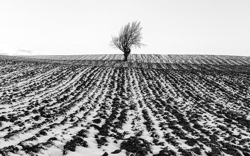 tree in snowy landscape