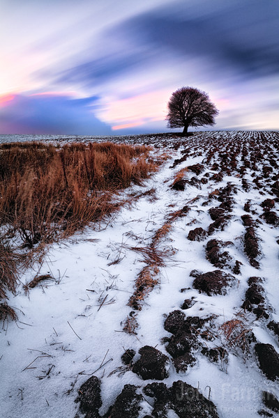 field in snow with furrows  taken in sandford south lanarkshire scotland  a rare moment of snow had covered the landscape with just enough so the furrows were still evident