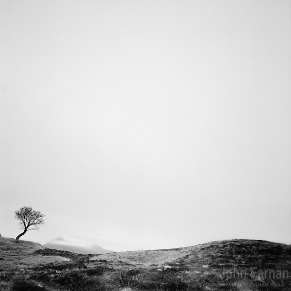 Small tree with Suilven in the background