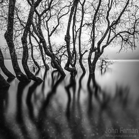 Loch Lomond Trees print