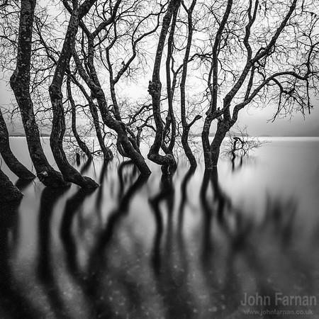 Loch Lomond Trees print
