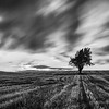 A personal take on this stunning landscape <br /> Blasted by wind and scoured as the higher parts of Lanarkshire always are..