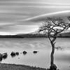 Millarochy Bay Loch Lomond<br /> loch lomond print<br /> Loch Lomond Fine Art Print <br /> Loch Lomond canvas<br /> Millarochy bay print