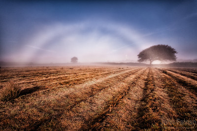 Fog bow in a field