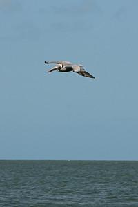 G2 5-3-09 flamingo (19)
