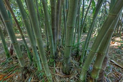 G2 Bamboo (2)