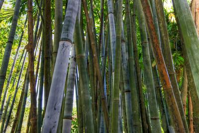 G2 Bamboo (11)