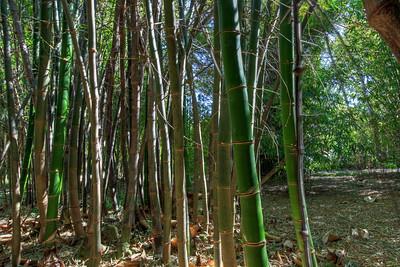G2 Bamboo (27)
