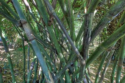 G2 Bamboo (4)