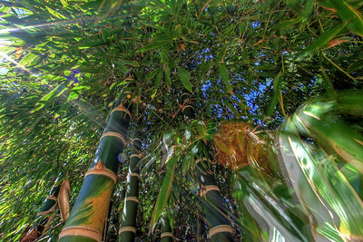 G2 Bamboo (22)