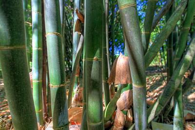 G2 Bamboo (19)