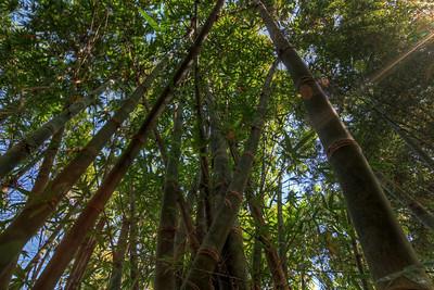 G2 Bamboo (28)