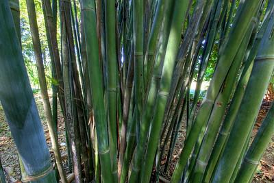 G2 Bamboo (23)
