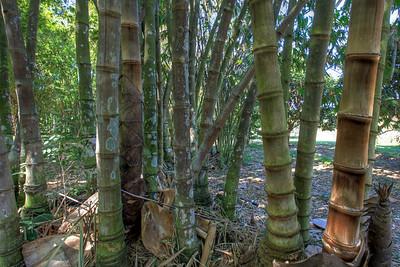 G2 Bamboo (20)