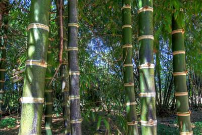 G2 Bamboo (18)