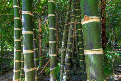 G2 Bamboo (7)