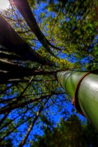 G2 Bamboo (21)