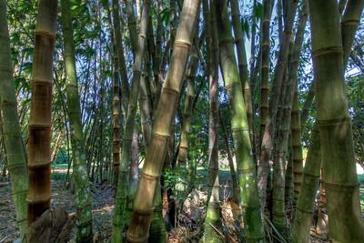 G2 Bamboo (10)