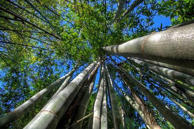 G2 Bamboo (9)