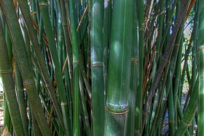 G2 Bamboo (8)