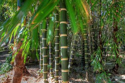 G2 Bamboo (24)