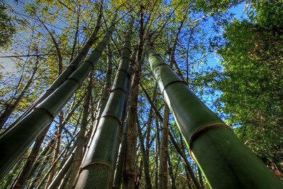 G2 Bamboo (12)