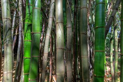 G2 Bamboo (13)