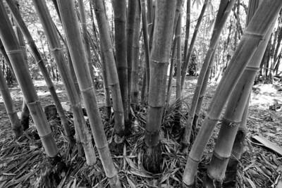 G2 Bamboo (16)