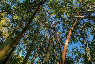 G2 Bamboo (14)