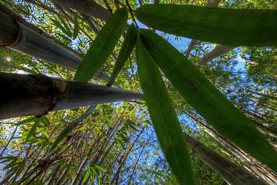 G2 Bamboo (3)