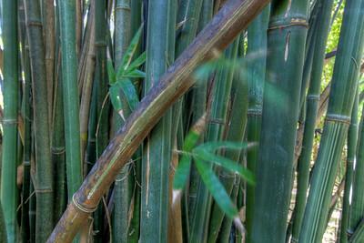 G2 Bamboo (26)