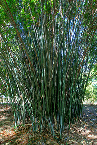 G2 Bamboo (25)