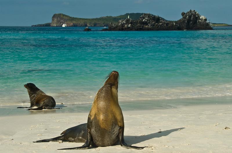 Sea Lions, Espanola Island