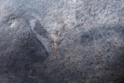Hippopotamus skin (Pele de Hipopótamo)