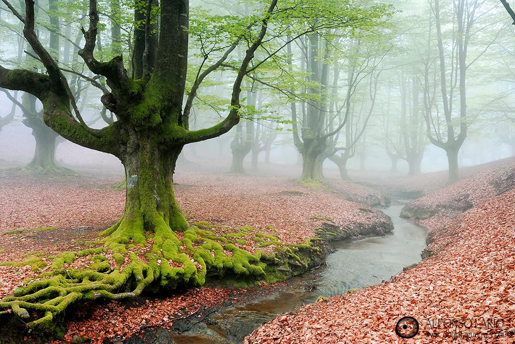 Niebla en Hayedo de Otzarreta. Parque Natural de Gorbeia.