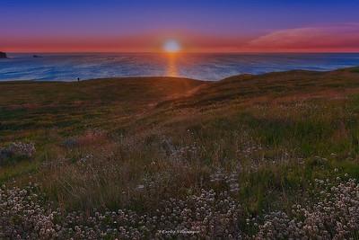Islandia-Flores