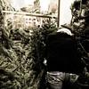 Christmas Tree Shopping!<br /> <br /> Leipzig, Germay<br /> 2012