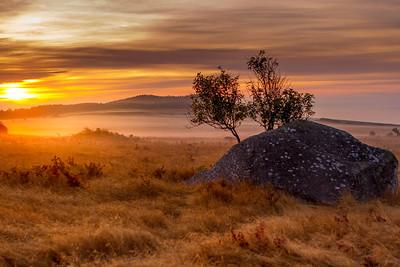 Cattle Point Dawn