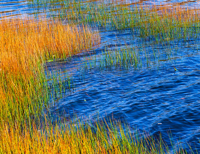 Reeds, Wind & Blue Water I
