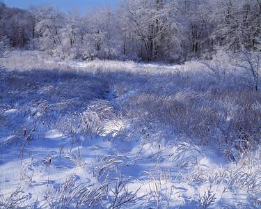 Snow Meadow II