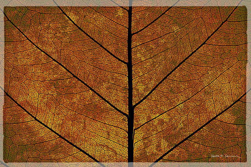 Bodhi leaf detail
