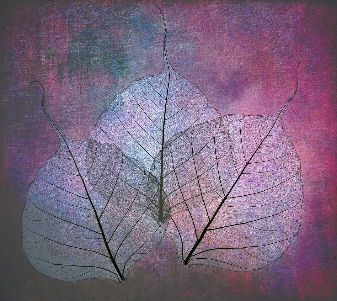 Three Bodhi leaves on canvas